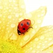 Ladybug on yellow flower — Stock Photo #32388473