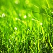 Green grass — Foto de stock #32388757