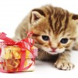 isolated cat and gift — Stock Photo