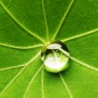 Water drop on green leaf — Stock Photo #32772873