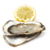 Oyster and lemon on white — Stok fotoğraf