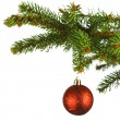 Red christmas ball on fir — Stock Photo #33277239