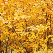 Orange autumn tree — Stock Photo