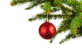 Red christmas ball on fir — Stock Photo