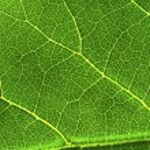 Green leaf — Stock Photo #34294503
