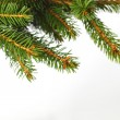 Fir branch on white — Stock Photo