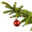 Red christmas ball on fir — Stock Photo #34296649
