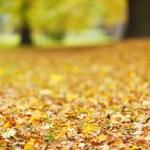 Colorful autumn leaves — Stock Photo #34296839
