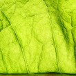 Green leaf vein — Stock Photo #34738827