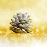 Pine cone — Stock Photo #34747337