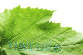 Foglia verde con gocce d'acqua — Foto Stock