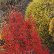 Autumn tree — Photo