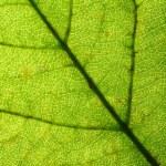 Green leaf vein — Stock Photo #35655741