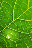Water drop on leaf macro — Stockfoto