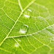 Water drops on leaf macro — Stock Photo