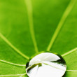 Water drop on green leaf — Stock Photo