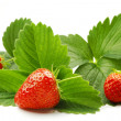 Strawberry with leaves — Stock Photo