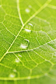 Water drops on leaf macro — Foto Stock