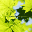 Beautiful leaves — Stock fotografie