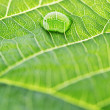 Water drop on leaf — Stock Photo