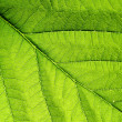 Green leaf vein — Stock Photo #37335153