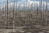 Landscape of Kamchatka: Dead wood — Stock Photo