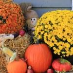 Thanksgiving Decoration — Stock Photo