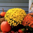 Thanksgiving Decoration — Stock Photo