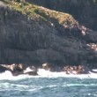 Stock Video: Typical Newfoundland coast line
