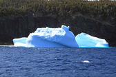 Remaining of big Icebergs reached the shore of Newfoundland  — Stock Photo