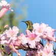 Beautiful bird in the flowers — Stock Photo