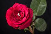 Perfect Valentine's Day gift — Stock Photo