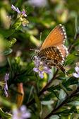 Little butterfly — Stock Photo