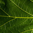 Green leaf — Stock Photo #27078111