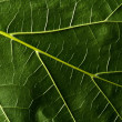 Green leaf — Stockfoto #27078137