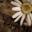 Old music notes with dry daisy — Stock Photo #27148325