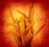 Orecchie grunge dello sfondo di grano — Foto Stock