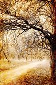Kuru ağaçlar ile Grunge park — Stok fotoğraf