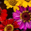 Flowers background — Stock Photo #29206785