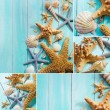 Stock Photo: Seashells collage