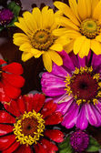 Wildflowers background — Stock Photo