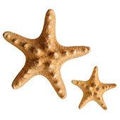 Starfish isolated on white background — Stock Photo