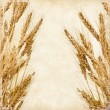 Ears of wheat — Foto Stock