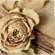 Vintage background with dry flower — Stock Photo