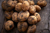 спелые картофель — Стоковое фото