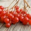 Red berries - Stock Photo