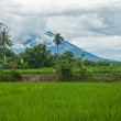 Bali landscape — Stock Photo #38544853