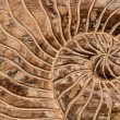 Shell pattern on wooden surface — Stockfoto #38743493