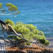 Pine branch over the sea - Stock Photo