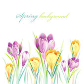Spring background with crocuses — Stock Vector
